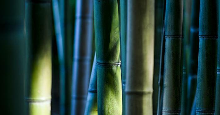 Immagine simbolica con canne di bambù verde-blu