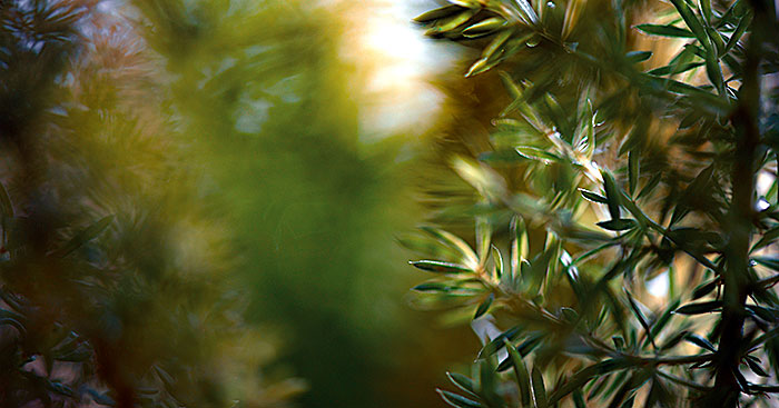 Immagine onirica di un bosco